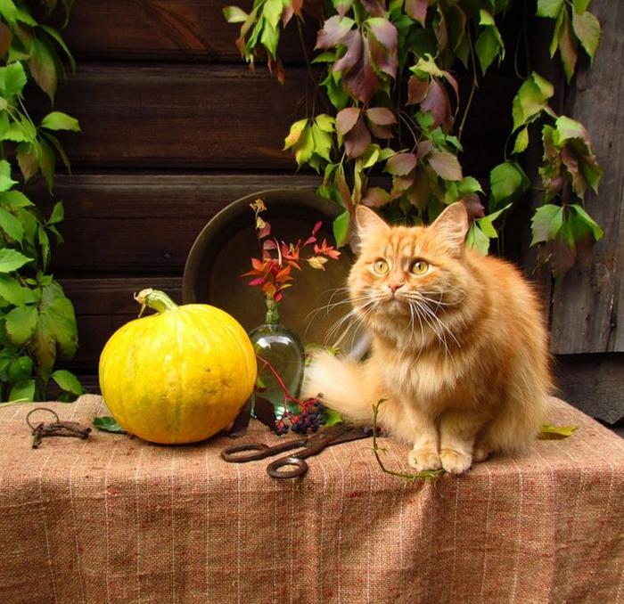 a045ace14451f9b9872f385094aa0f40--autumn-animals-furry (700x678, 538Kb)