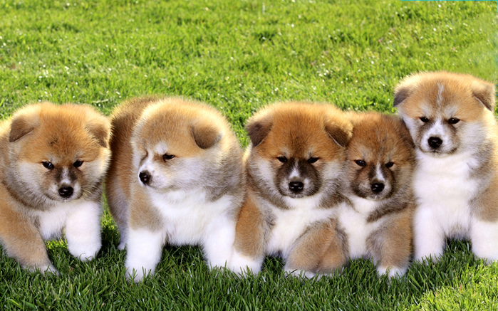 the-most-beautiful-and-cute-dogs-in-the-world-15 (700x437, 475Kb)