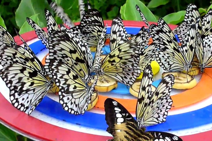 Butterfly-Park-Insect-Kingdom (700x466, 417Kb)