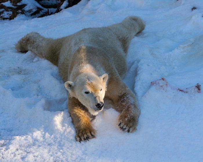 Winter_Bears_Polar_bears_511911_1280x1024 (700x560, 458Kb)