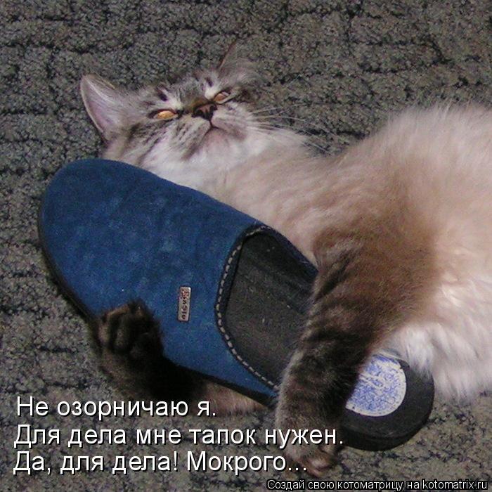 kotomatritsa_b (700x700, 346Kb)