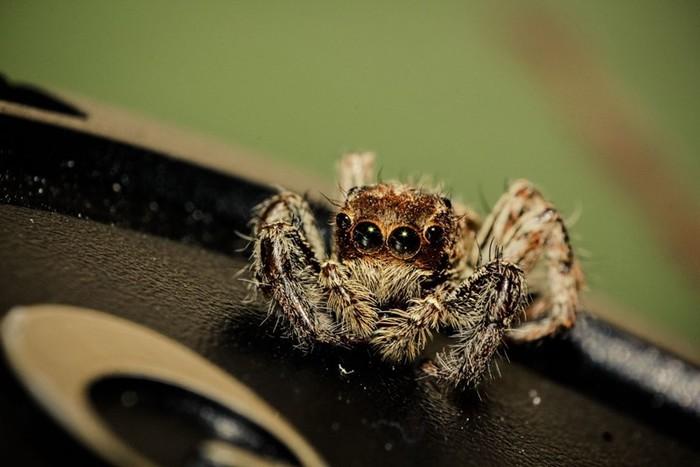 Вот почему в квартире заводятся пауки. Лучше присядьте