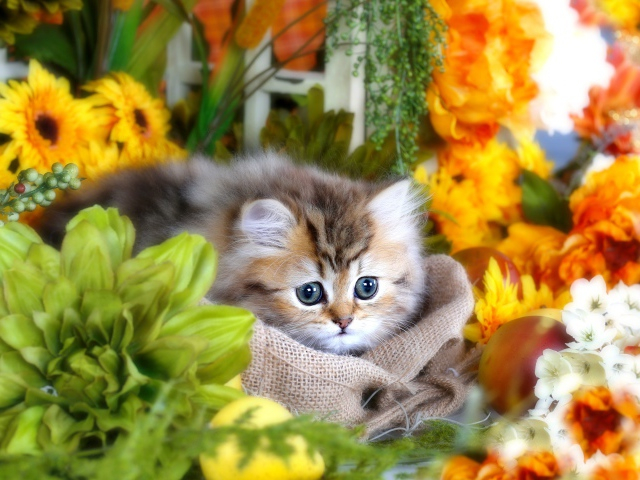 2017Animals___Cats_Cute_fluffy_gray_kitten_with_big_eyes_in_flowers_120001_29 (640x480, 331Kb)
