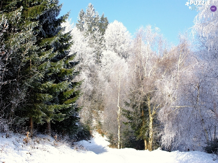 way-winter-viewes-forest-trees-snowy (700x525, 512Kb)