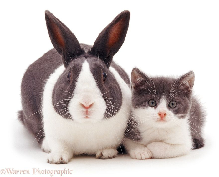 cute-matching-pets-warren-photographic-4-57e934f0b4adc__880 (700x566, 219Kb)
