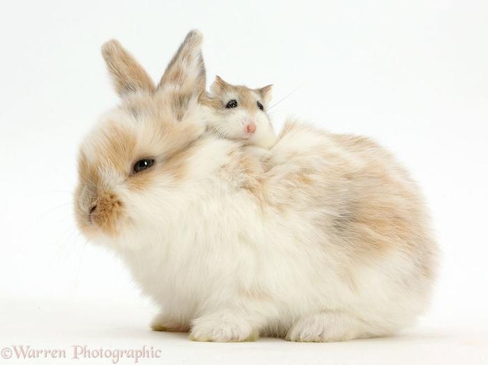 cute-matching-pets-warren-photographic-49-57e9355d6a944__880 (700x524, 182Kb)