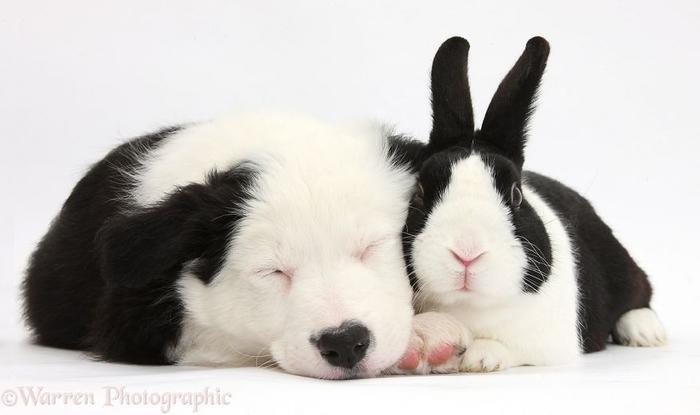 cute-matching-pets-warren-photographic-40-57e9354bd07c0__880 (700x415, 140Kb)
