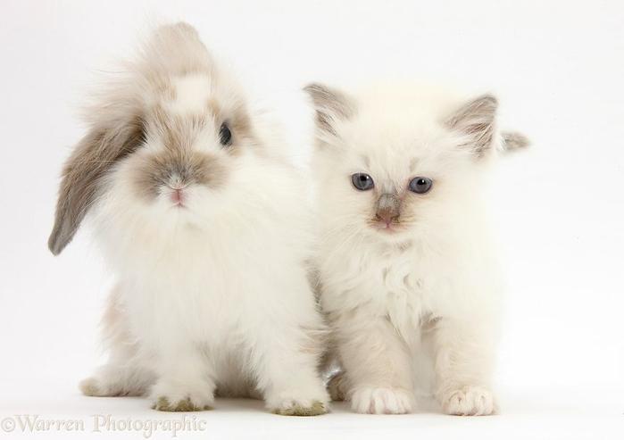cute-matching-pets-warren-photographic-37-57e935441c279__880 (700x493, 154Kb)