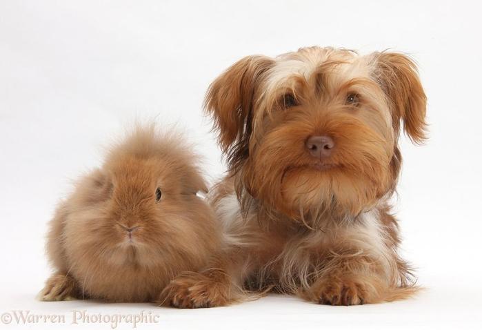cute-matching-pets-warren-photographic-20-57e935162e382__880 (700x478, 211Kb)