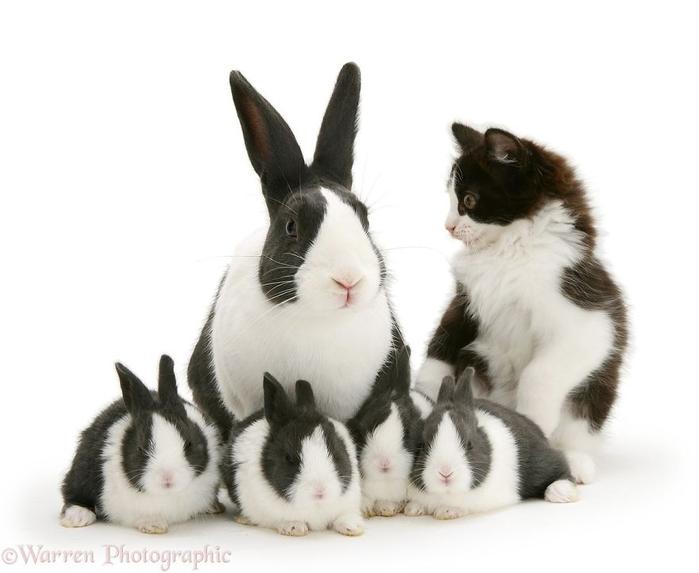 cute-matching-pets-warren-photographic-13-57e93506accb6__880 (700x573, 170Kb)