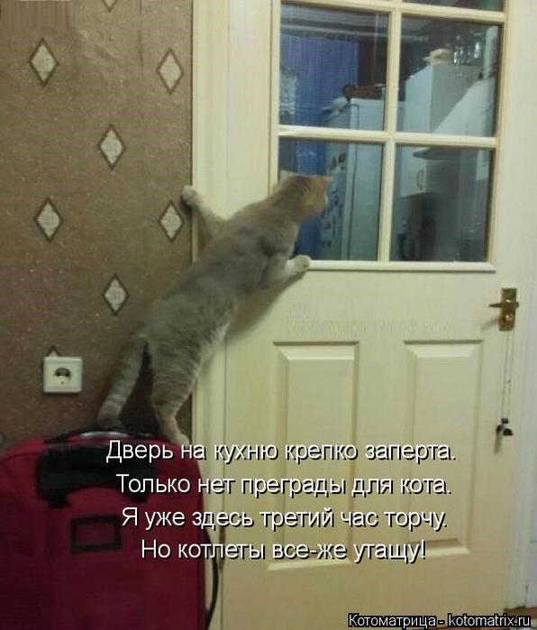 kotomatritsa_IG (596x700, 323Kb)