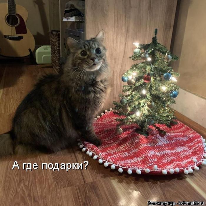 kotomatritsa_J (700x700, 432Kb)