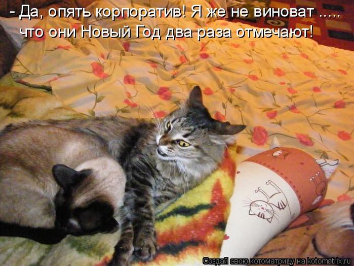 kotomatritsa_pR (700x524, 426Kb)