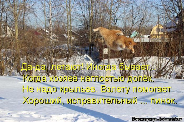 kotomatritsa_VS (700x466, 470Kb)