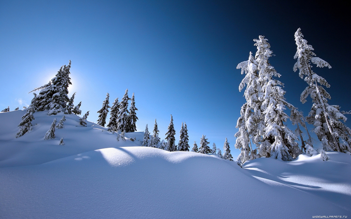winter-wallpaper-1920x1200-003 (700x437, 355Kb)