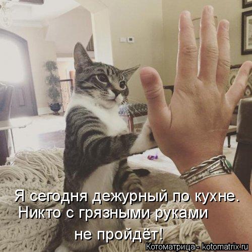 kotomatritsa_1 (500x500, 168Kb)