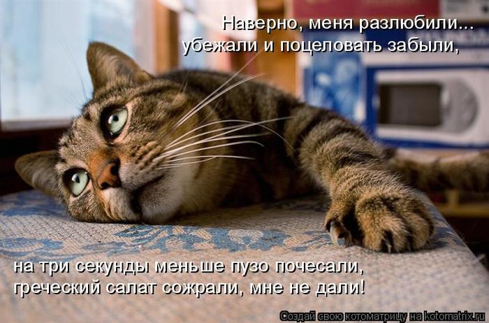 kotomatritsa_a (700x462, 352Kb)