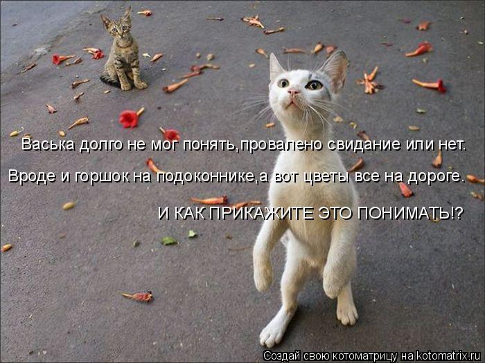 kotomatritsa_F- (700x525, 239Kb)