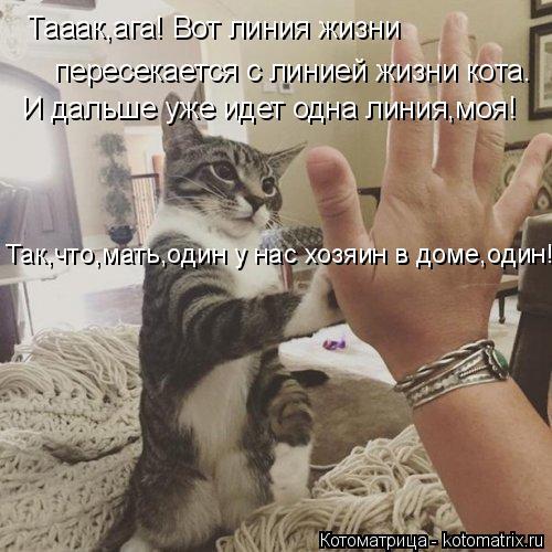kotomatritsa_g (500x500, 186Kb)