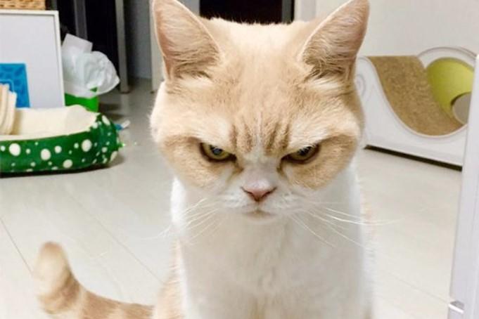 Кошка два дня не выпускала хозяйку из кухни