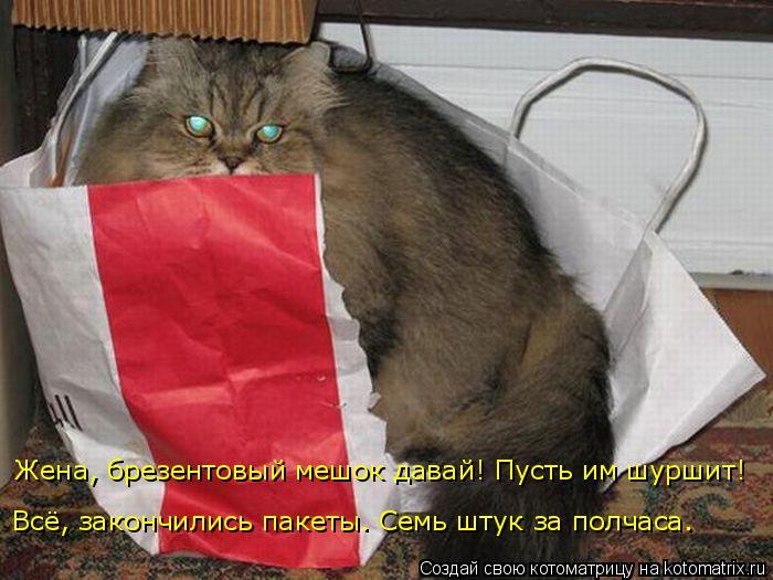 kotomatritsa_2 (700x525, 254Kb)
