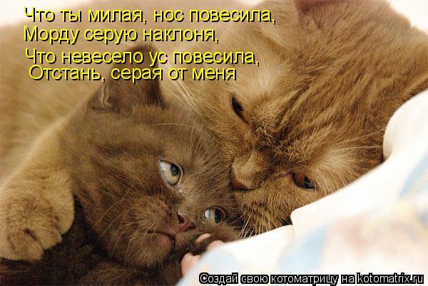 kotomatritsa_a (600x402, 211Kb)
