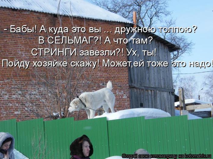 kotomatritsa_O (700x524, 433Kb)