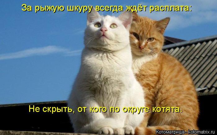 kotomatritsa_u (700x436, 291Kb)