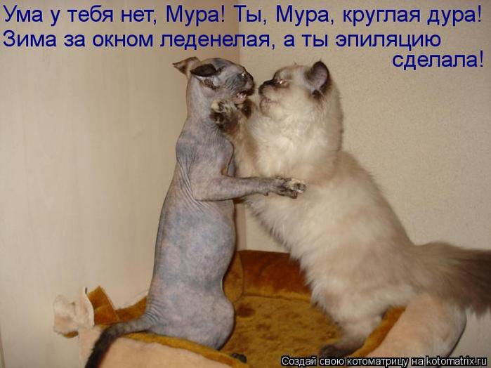 kotomatritsa_a- (700x524, 287Kb)