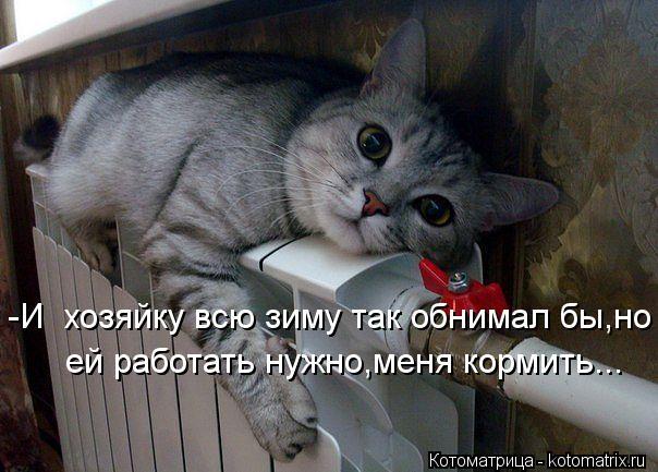 kotomatritsa_oX (604x433, 211Kb)