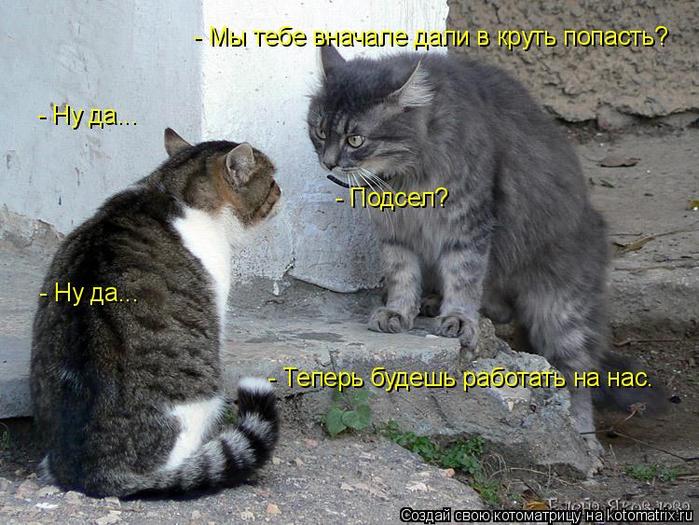 kotomatritsa_1 (700x525, 390Kb)