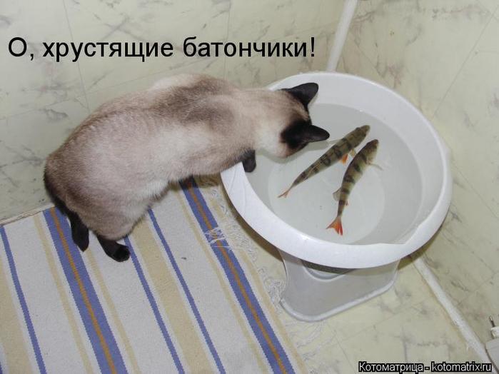 kotomatritsa_9I (700x524, 269Kb)