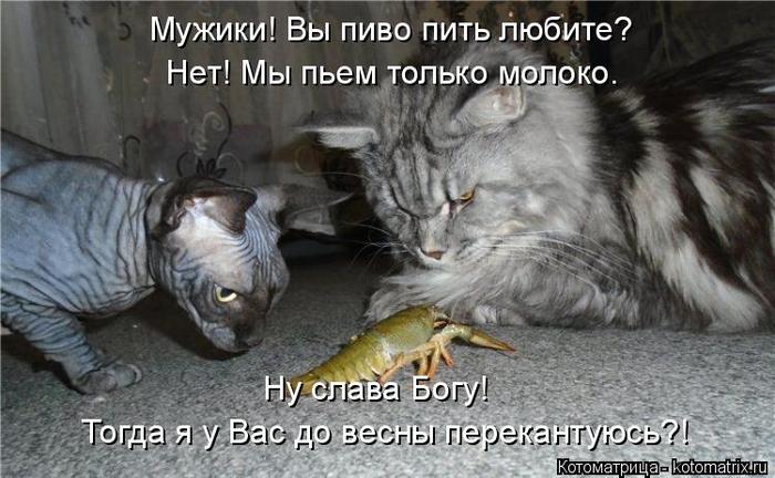 kotomatritsa_h (700x432, 277Kb)