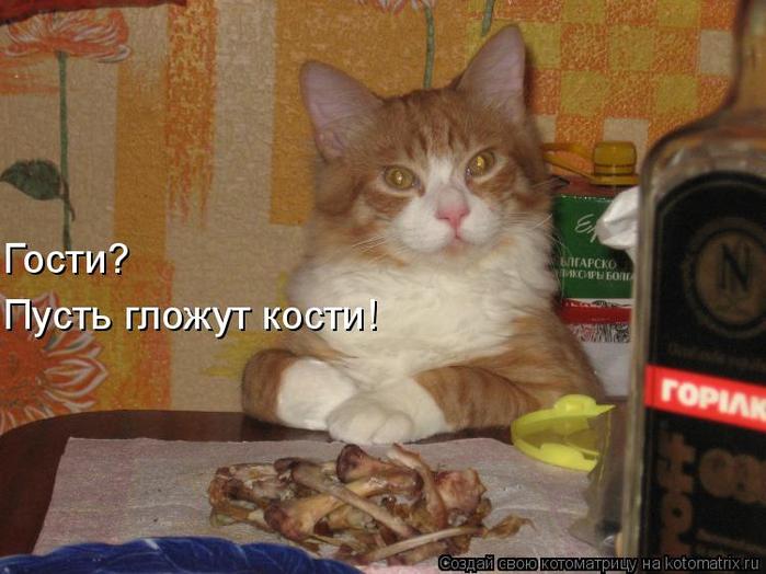 kotomatritsa_Q (700x524, 349Kb)