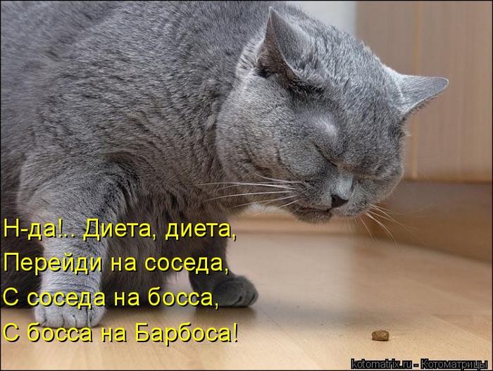 kotomatritsa_u (1) (700x527, 349Kb)