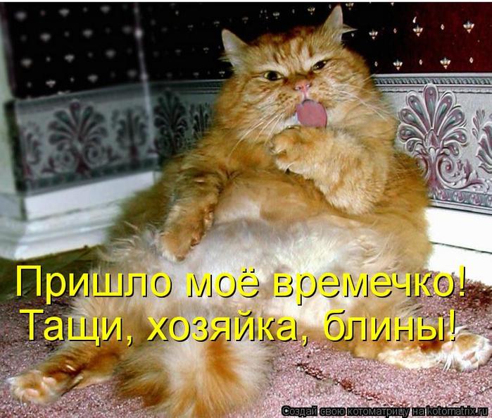 kotomatritsa_v (700x593, 463Kb)