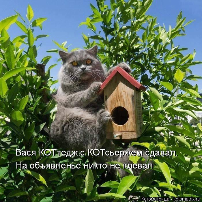 kotomatritsa_Xw (700x700, 445Kb)