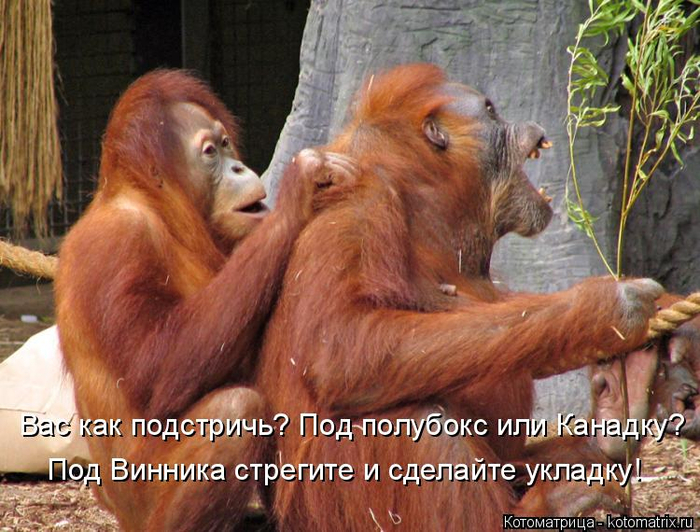 kotomatritsa__ (700x532, 430Kb)