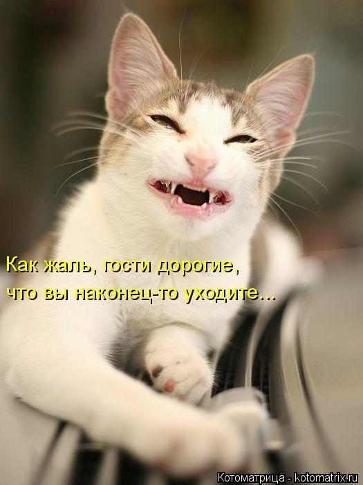 kotomatritsa_F (525x700, 186Kb)