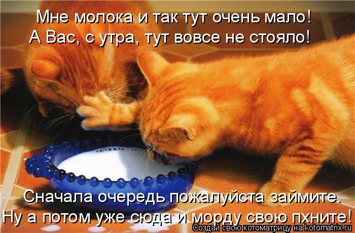 kotomatritsa_H (700x459, 320Kb)