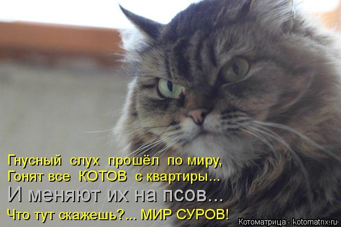kotomatritsa_L (700x466, 208Kb)