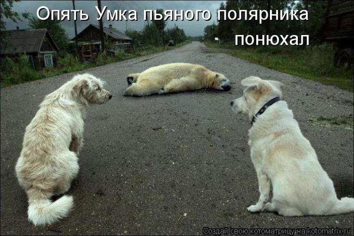 kotomatritsa_s (700x465, 291Kb)
