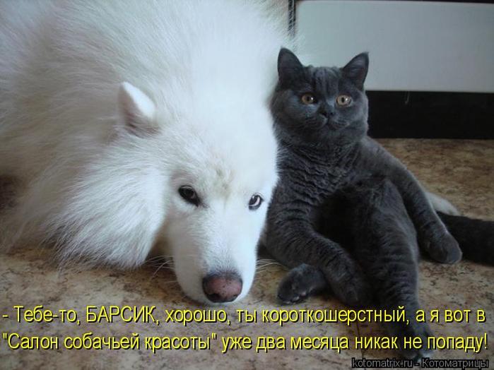 kotomatritsa_w (700x524, 320Kb)