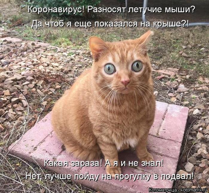 kotomatritsa_y (700x646, 122Kb)