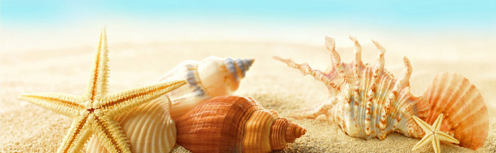 seashells-starfishes-beach-5780 (700x215, 58Kb)