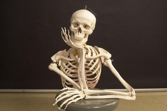 На что способны наши кости? 13 интересных фактов