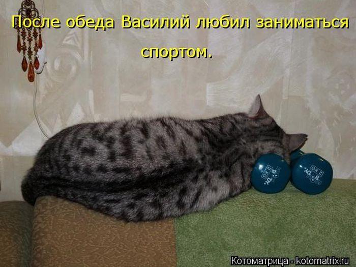 1346093765_kotomatrici_na_lyuboy_vkys_57-95809-92 (700x525, 60Kb)