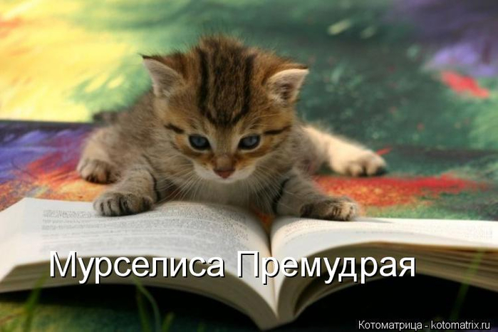 kotomatritsa_cH (700x466, 262Kb)