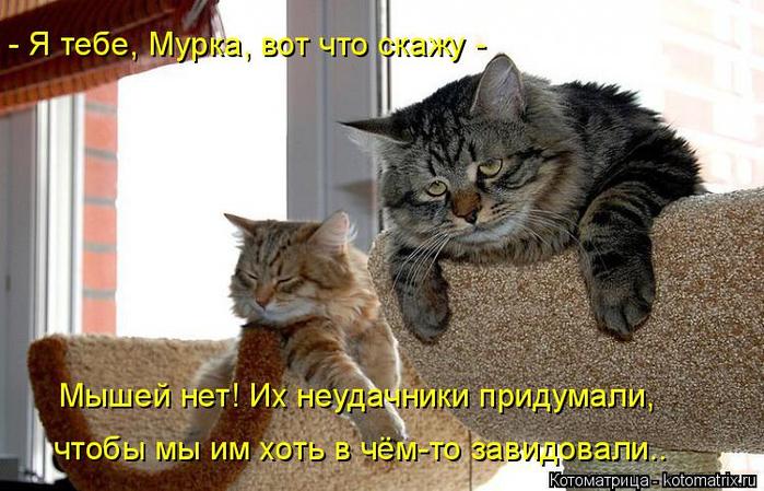 kotomatritsa_0B (700x449, 337Kb)