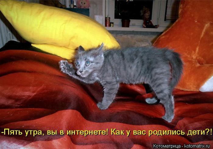 kotomatritsa_bg (700x491, 356Kb)